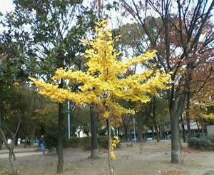 泉尾公園の秋2007