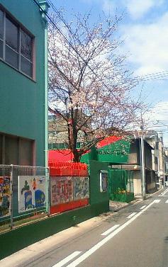 08_sakura.jpg