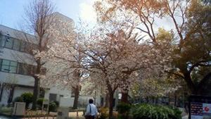 大正区の春2010